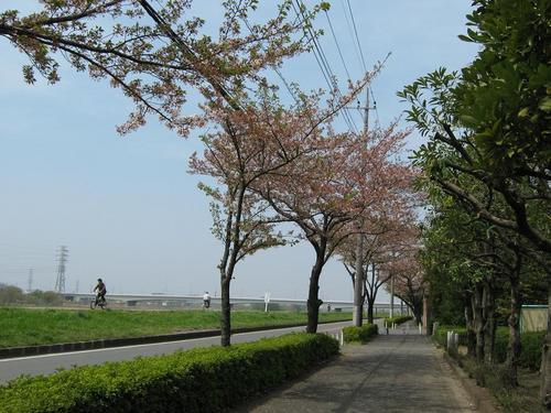 2009.4.12プチツ~陣馬高原 002.jpg
